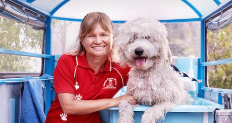 Aussie Pooch Mobile Dog Wash & Grooming - Victoria - 3