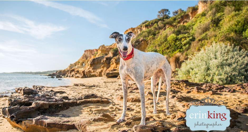 Erin King Pet Photography - Melbourne & Surrounds image