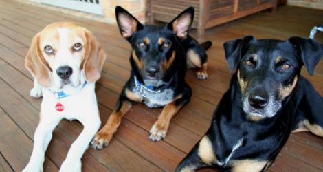 K9 Walkers - Pet Sitting & Home Stays image