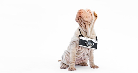 Linda Warlond - Pet Photographer image