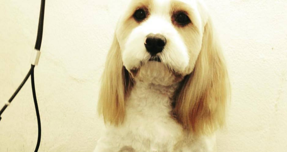 PawsAbout Grooming Salon- Coogee - 3