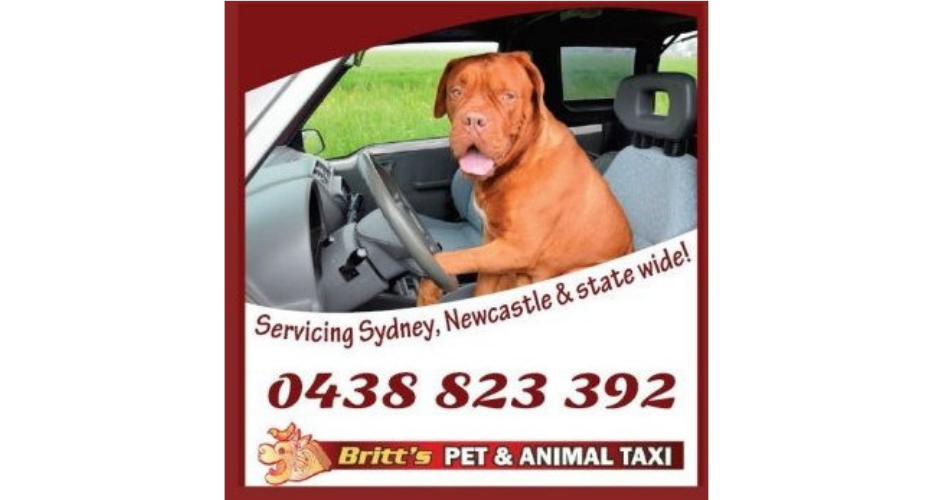 Britt's Pet And Animal Taxi image