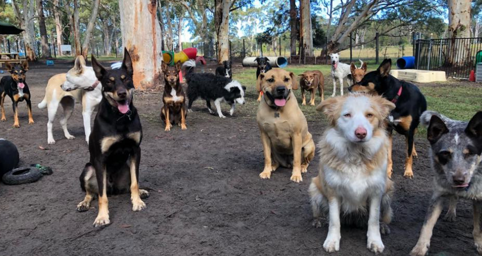 K9 Country Farmstay- Doggy Day Care & Training image
