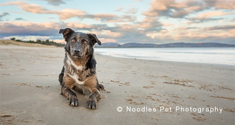 Noodles Pet Photography - 3