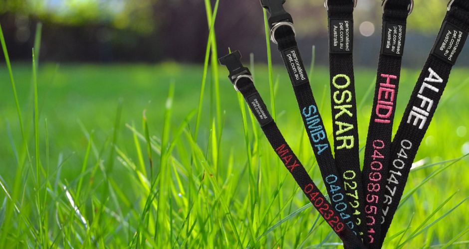 Personalised Pet Collars - TAS (Delivery) image