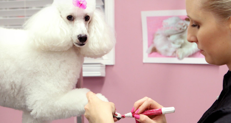 Pooch Avenue - Day Spa & Grooming - 2