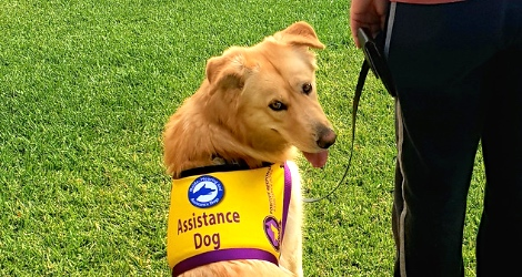 Positive Response Assistance Dogs - Gold Coast  Area - 1