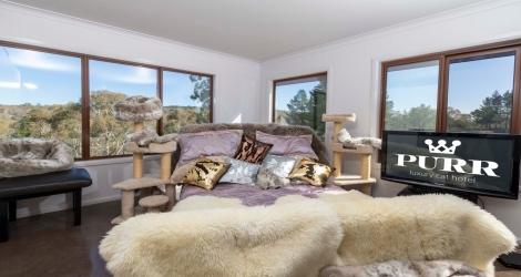 PURR Luxury Cat Hotel image