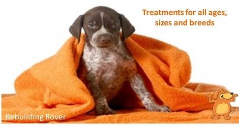 Rebuilding Rover – Massage for Dogs - 2