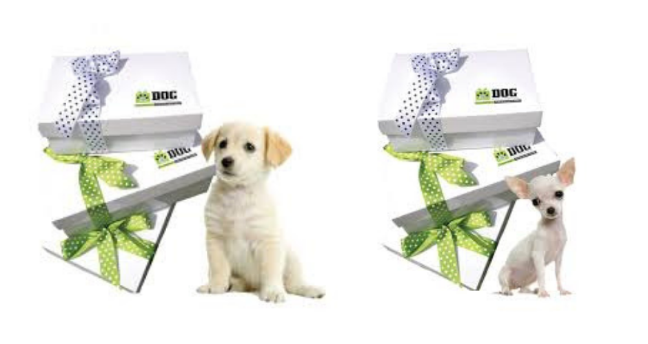 Scamper Hampers - ACT (Delivery) image