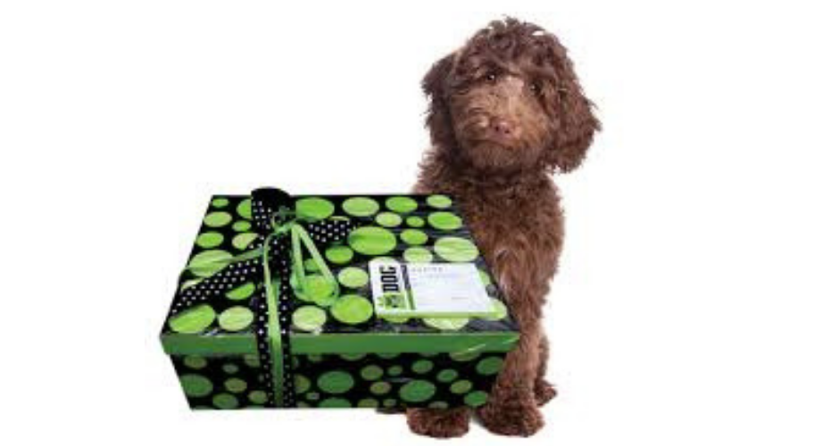 Scamper Hampers - QLD (Delivery) - 1